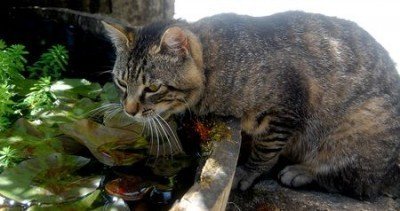 The green drinking bowl