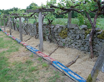 pallet border under the vines