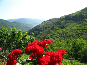 Ribeira Sacra Holey Valley
