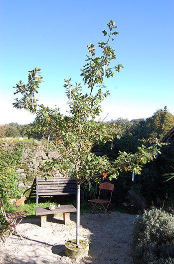 Autumn - Pre xmas tree